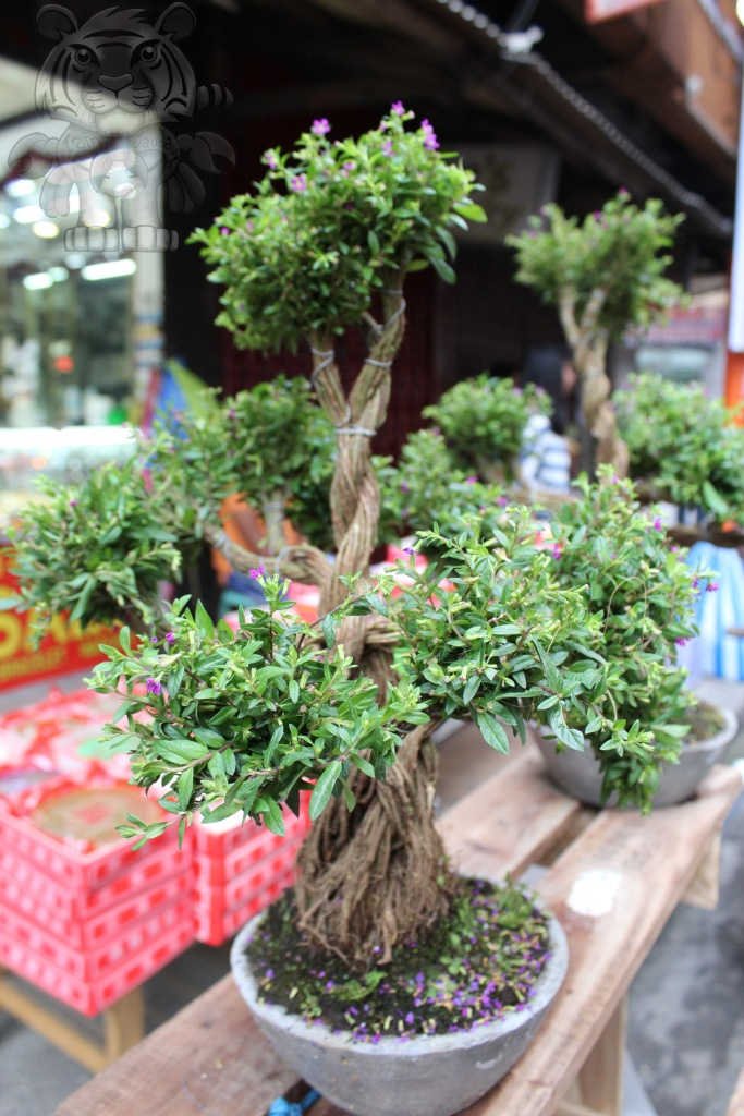 Penjing trees, also known as Bonsai