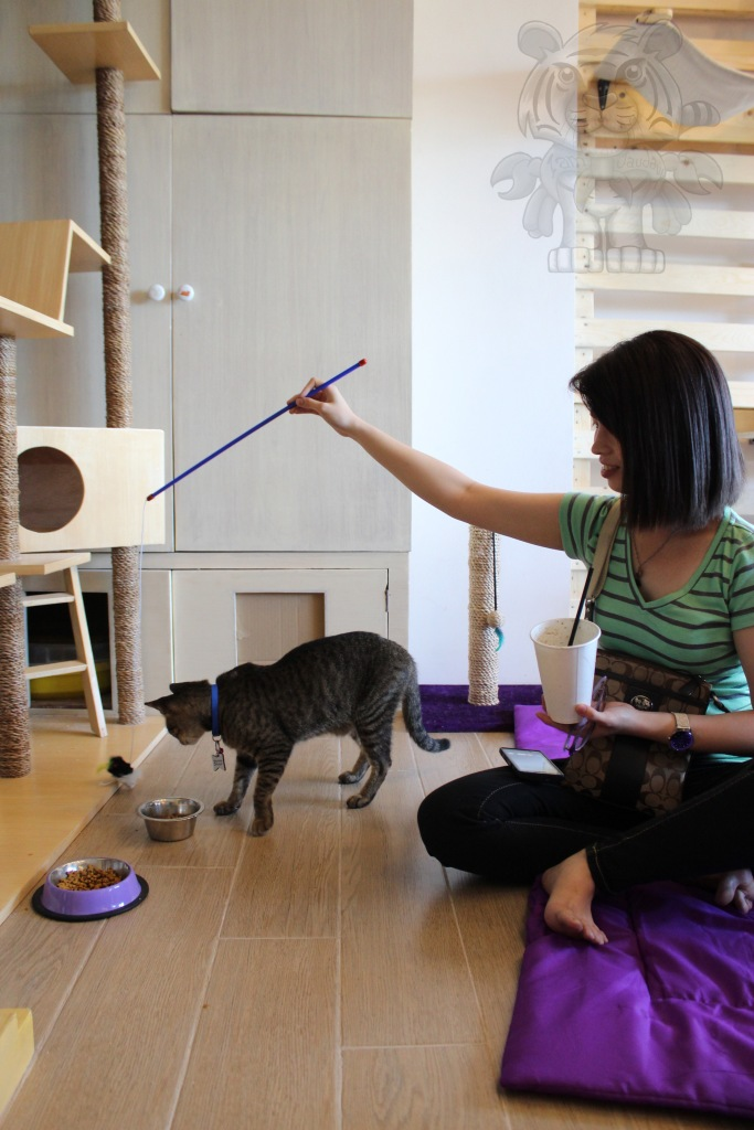 """My friend enjoys being a """"mouse puppeteer"""" for this cat."""