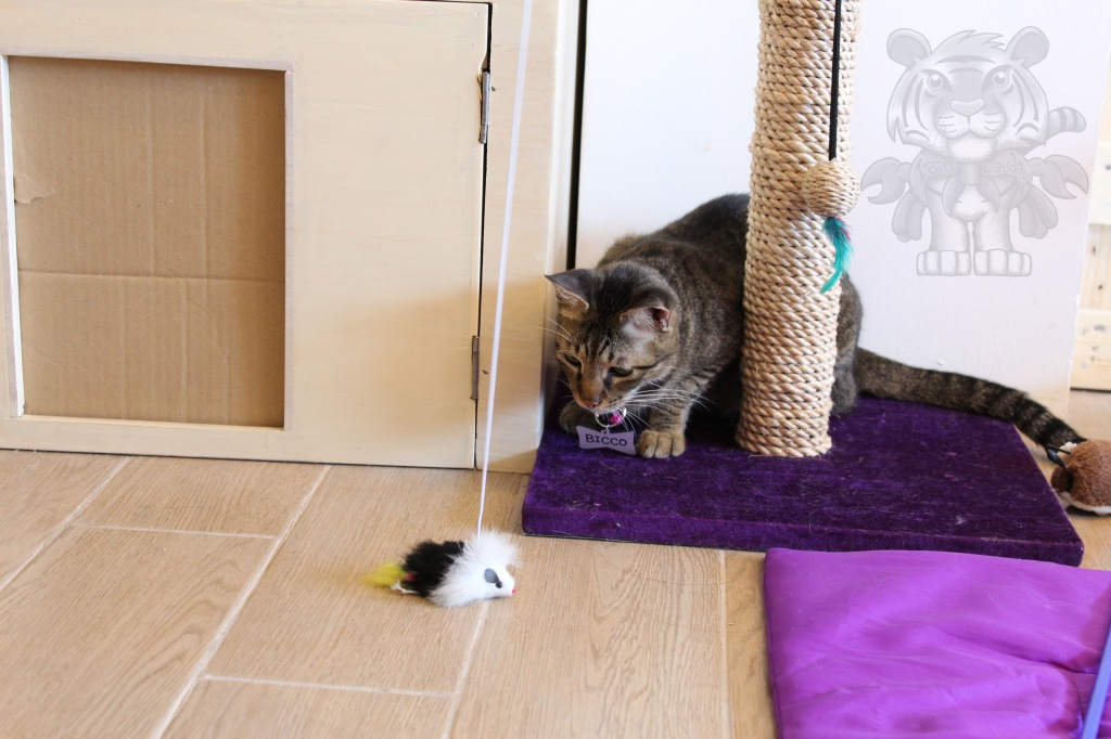 """The """"crouching tiger"""", not-so-hidden mouse toy."""