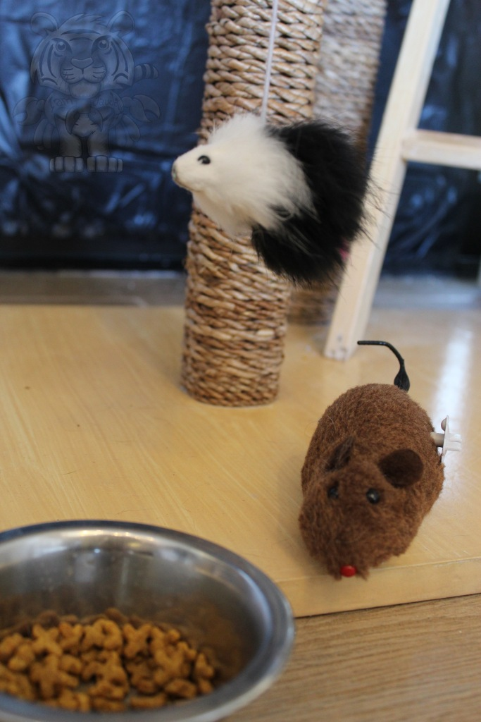 The Cafe shop has toys to play with cats.